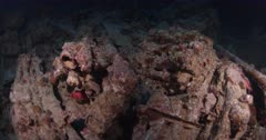 A Close up shot over rifles on the Thistlegorm Shipwreck.