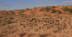 An Aerial shot over the red sand dunes and sparse vegetation of the Kalahari
