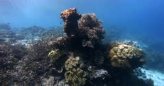 Coral reef fish swarm over a healthy bommie covered in hard and soft coral and sponges with god rays trickling through.