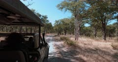 A tracking shot of a safari vehicle driving on bumpy dirt roads in the bush.