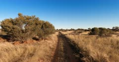 A tracking shot on a dirt road, passing thorn trees and long savanna grass.
