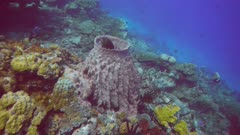 a fish hides inside a large barrel sponge and then swims away