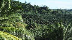 a palm oil plantation in papua new guinea