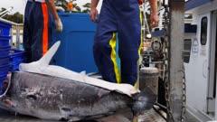 a deckhand moves a swordfish carcass on a trolley