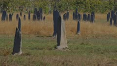 a close up panning shot of magnetic termite mounds at litchfield national park