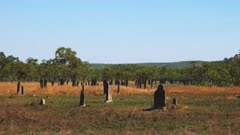 a wide view of magnetic termite mound in litchfield national park in australia's northern territory