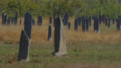 a close up of magnetic termite mound in australia's northern territory