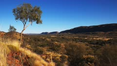 the west macdonnell ranges near alice springs and a gum tree