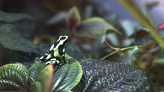 a green and black poison dart frog sitting on a green leaf