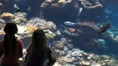 children identify fish in a large public aquarium