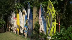 a collection of old retired windsurfing boards in a garden at paia on the hawaiian island of maui