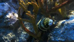 close up of a snowflake moray eel in a large public aquarium