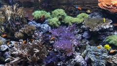 a colorful coral reef aquarium