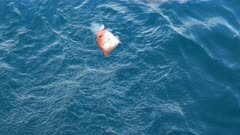 a fisherman winds in a small nannygai fish near terrigal on the australian coast
