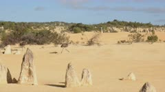 tracking shot of two emus running at the pinnacles, unusual rock formations, in western australia