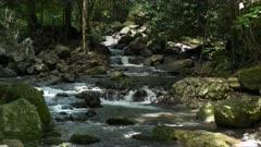 rainforest creek at natural bridge in springbrook national park
