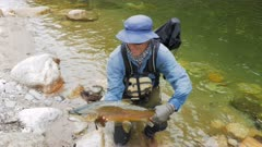 a fly fisherman picks up a large brown trout caught in a clear new zealand river