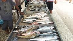 freshly caught fish for sale at a market on copacabana beach in rio de janeiro, brazil