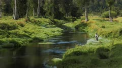 fly fisherman casts a fly on a lush spring creek in new zealand