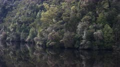 close up of temperate rainforest growing by the gordon river on the west coast of tasmania, australia