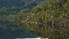 panning shot of temperate rain forest on the gordon river in tasmania, australia