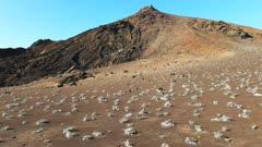 grey matplant and a cinder cone on isla bartolome in the galapagos islands, ecuador