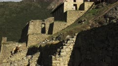 zoom out shot of two llamas and the ruins of stone buildings at machu picchu, peru