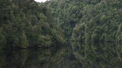 lush temperate rain forest on a gordon river cruise in tasmania, australia