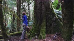 tilt up shot of a tourist looking at a rain forest tree in the tarkine wilderness in tasmania, australia