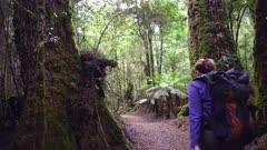 female hiker admires the forest in tarkine rainforest on the west coast of tasmania, australia