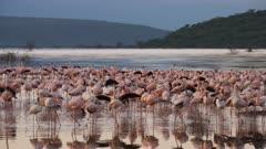 early morning shot of flamingo reflections in lake bogoria in kenya