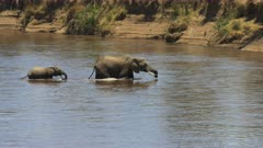 mother elephant and calf crossing the mara river in masai mara game reserve, kenya