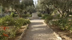 pathway and ancient olive trees in the garden of gethsemane, jerusalem israel