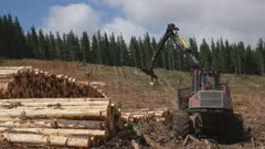 rear view of a crane arm unloading harvested pine logs near tarraleah in tasmania, australia