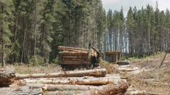 side view of a crane arm loading pine logs near tarraleah in tasmania, australia