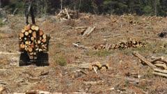 rear view of a log loader moving harvested pine logs near tarraleah in tasmania, australia