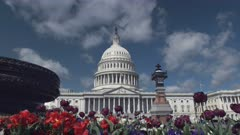 close up of a spring flower bed in front of the us capitol building in washington d.c.