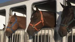 close up of three horses in a trailer near quartzite, az