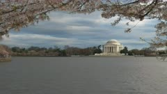 evening shot of the jefferson memorial and cherry trees in blossom at washington d.c.