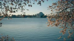 the jefferson memorial in spring with the tidal basin and cherry blossoms in washington d.c.