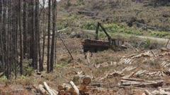 long view of a log loader loading pine logs near tarraleah in tasmania, australia