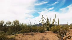 time lapse of organ pipe cactus and the puerto blanco mountains in organ pipe cactus national monument near ajo in arizona, usa