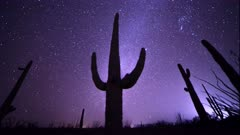 astro time lapse of a saguaro cactus in the sonoran desert of organ pipe cactus national monument near ajo in arizona, usa