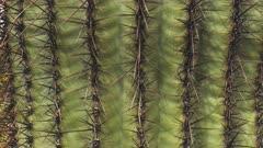 close up tilt up shot of a saguaro cactus in organ pipe cactus national monument near ajo in arizona, usa