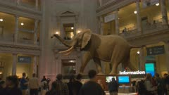 main foyer of the smithsonian natural history museum in washington d.c.