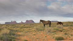 a profile shot of a horse with saddleback mesa in the distance at monument valley in utah, usa
