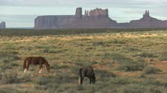 morning shot of two horses grazing at monument valley in utah, usa