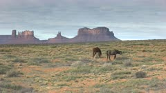 a wide shot of two horses grazing at monument valley in utah, usa