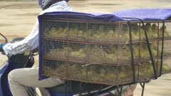 close up of baby ducks in a cage on a motorbike in northern vietnam