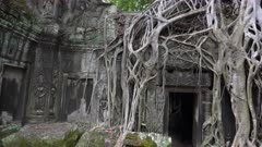 pan of strangler fig roots growing on ta prohm temple near angkor wat, cambodia- a location used in the movie lara croft tomb raider